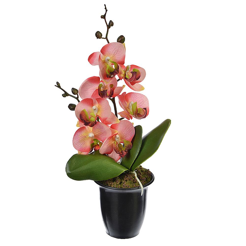 хорошо, орхидея в горшке картинки хорошего качества подобранные
