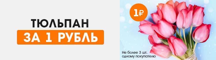 Тюльпан всего за 1 рубль